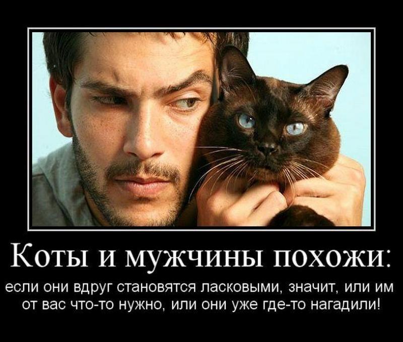 картинка про мужика и кота закончив